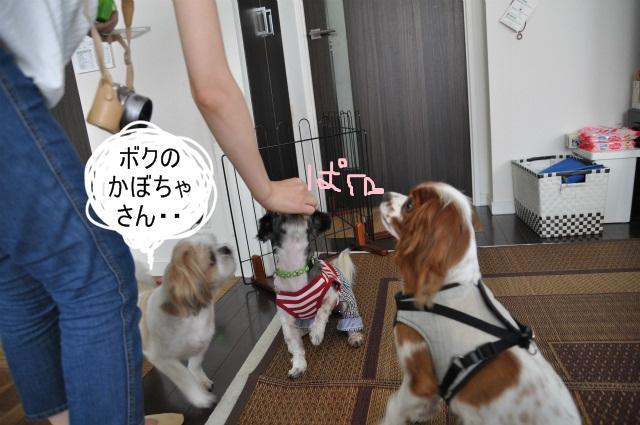 2013,07,17 パオちゃんいらっしゃ~い 012