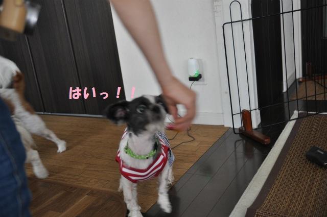 2013,07,17 パオちゃんいらっしゃ~い 019