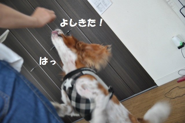 2013,07,17 パオちゃんいらっしゃ~い 022