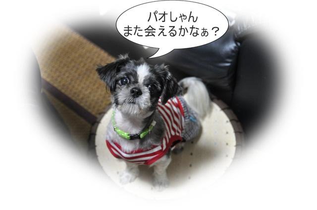 2013,07,17 パオちゃんいらっしゃ~い 034