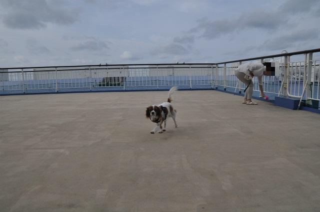 2013,09,21 新日本海フェリー船内 行き 001