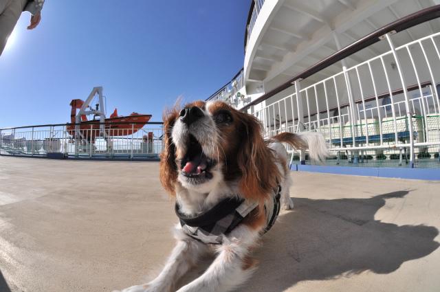 2013,09,21 新日本海フェリー船内 行き 101