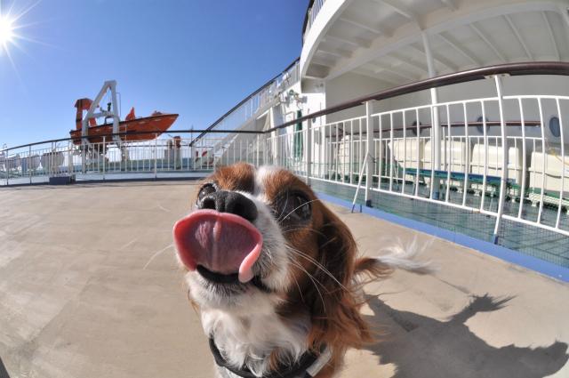 2013,09,21 新日本海フェリー船内 行き 106