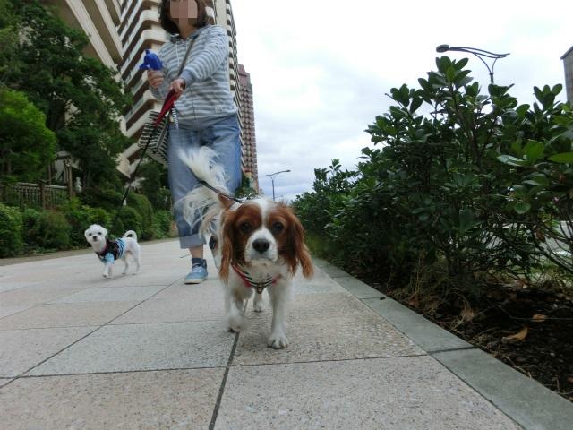 2013,10,15朝散歩 047