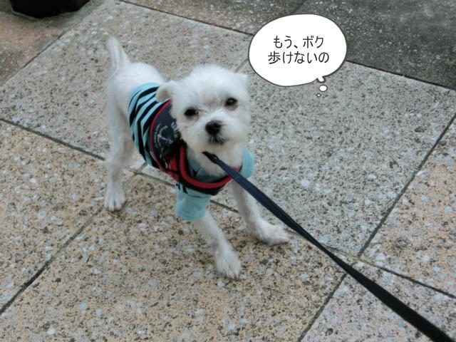 2013,10,15朝散歩 062