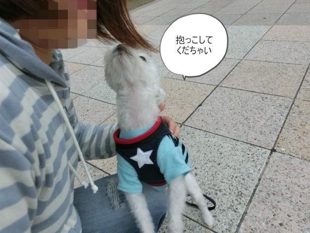 2013,10,15朝散歩 066