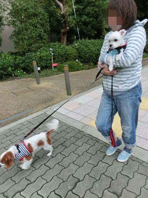 2013,10,15朝散歩 069
