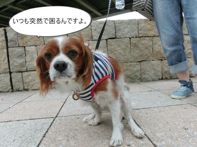 2013,10,15朝散歩 087