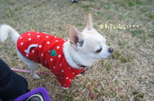 narakoko11.jpg