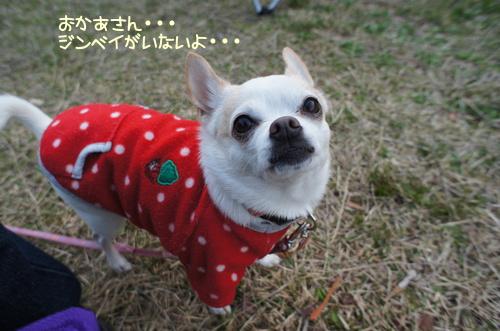 narakoko12.jpg
