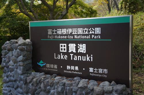 tanukiko1.jpg