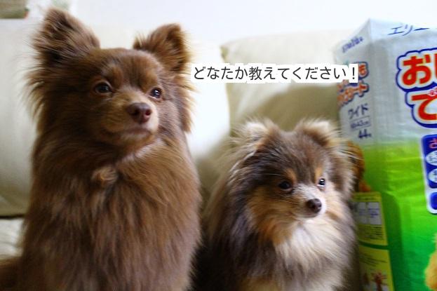 20130515ちゅらもえ (2)