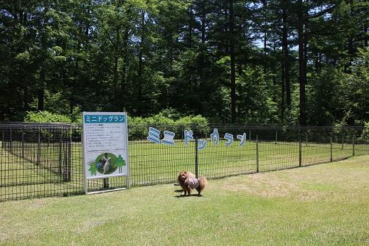 20130605あづみ野公園ドッグラン