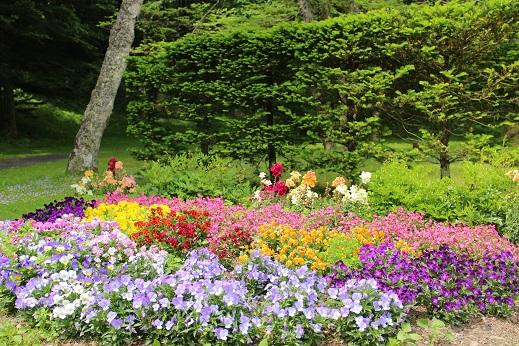 20130612お花