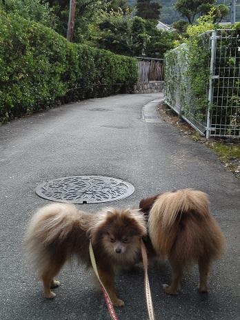 20130625お散歩