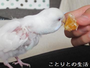 おみかんとココちゃん2