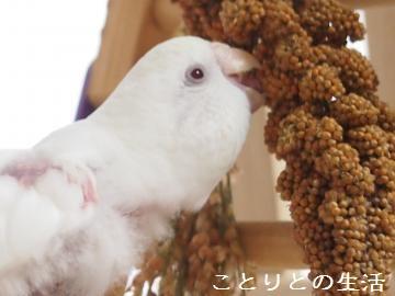 新粟穂とココちゃん2
