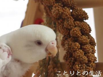 新粟穂とココちゃん3