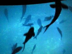 サメスクリーン