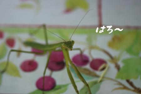 20130707_75b.jpg