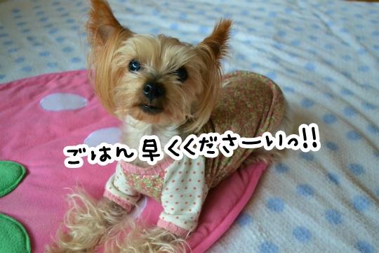 今日のわんこ(笑) (1)