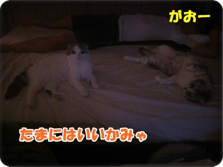 1-001_20131005140831ff4.jpg
