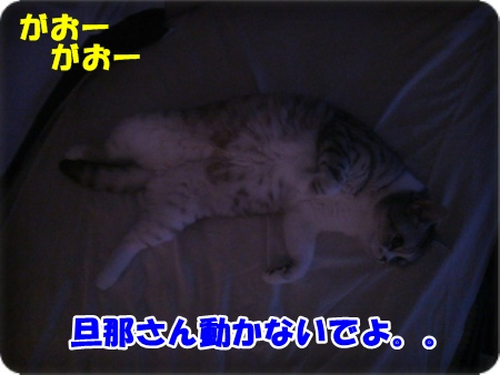 2-004_2013100514083049c.jpg