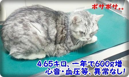 2013_07_27_14_36_12.jpg