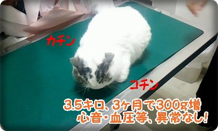 2013_07_27_14_39_21.jpg