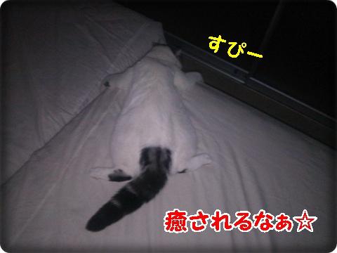 3_2013081800311959b.jpg