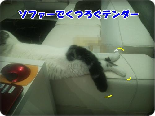 DSC_1705-001.jpg