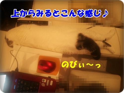 DSC_1709-003.jpg