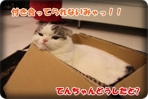 IMG_1108-004-001.jpg