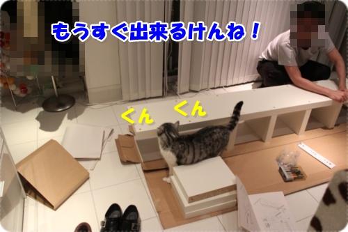 IMG_3708-004.jpg