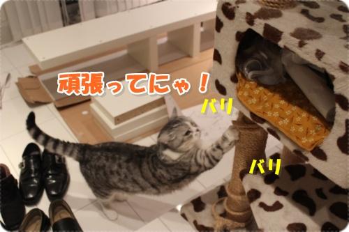 IMG_3712-005.jpg