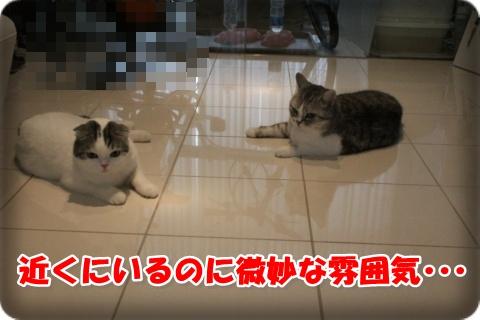 IMG_6484-003.jpg