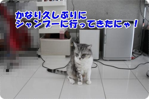 IMG_9428-009.jpg