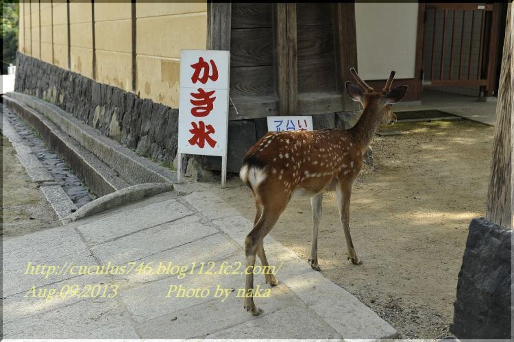 興福寺前 茶屋