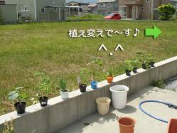 2013家庭菜園③