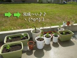 2013家庭菜園④