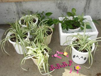 2013観葉植物