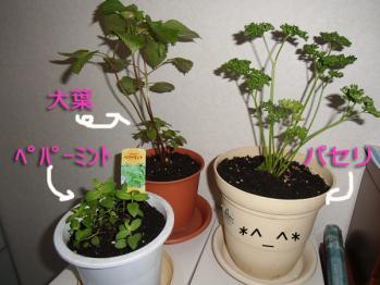 2013家庭菜園⑤