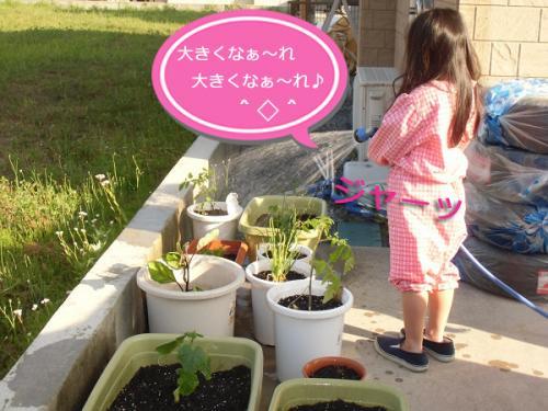 観葉植物⑥