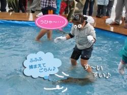 2013鮭のつかみ捕り③