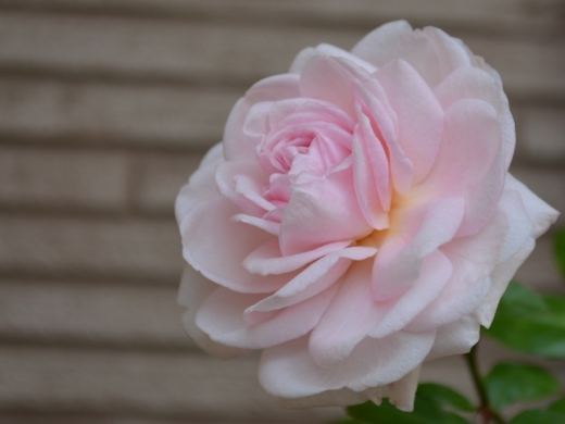 20141102_粉粧楼3