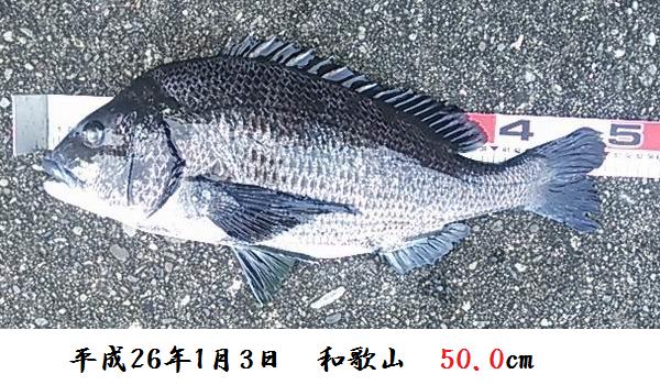 2014010350.jpg