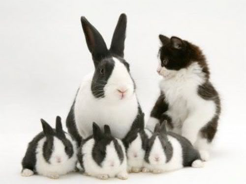 Cute20Easter20Animals01.jpg