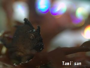 カエルキラ