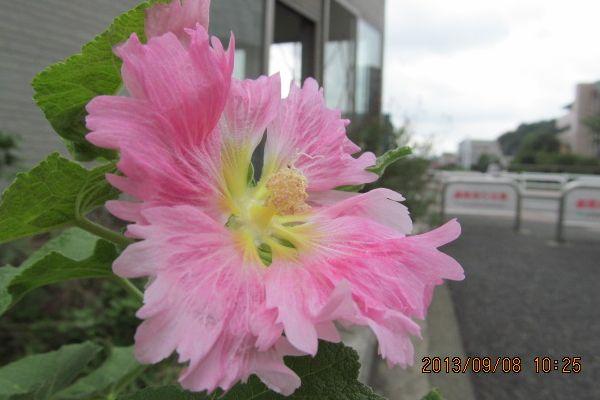 0908shinkoji05.jpg