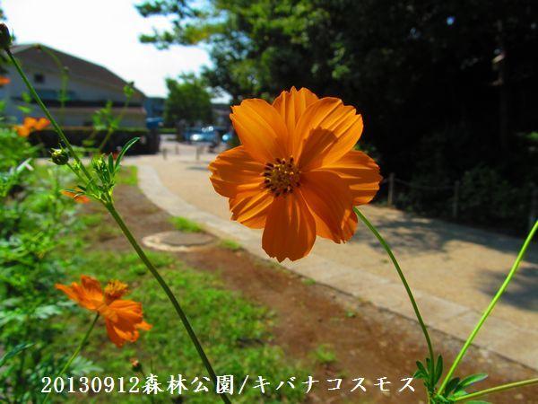 0912akihana04.jpg